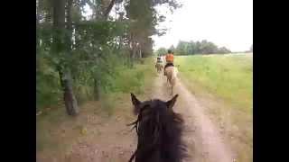 Epic full long gallop @ Estonia w. Ringi HD Quality (GoPro Hero3)