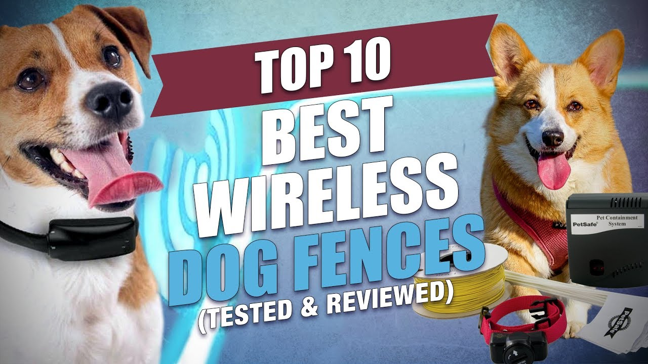 Top 10 Best Wireless Dog Fence Systems Tested And Reviewed Youtube