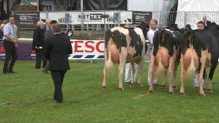 Tîm o 3 Llaeth dan berchnogaeth | Exhibitor Owned Team of 3 Dairy