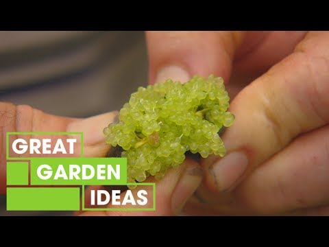 Native Australian Fruit And Vegetables | Gardening | Great Home Ideas