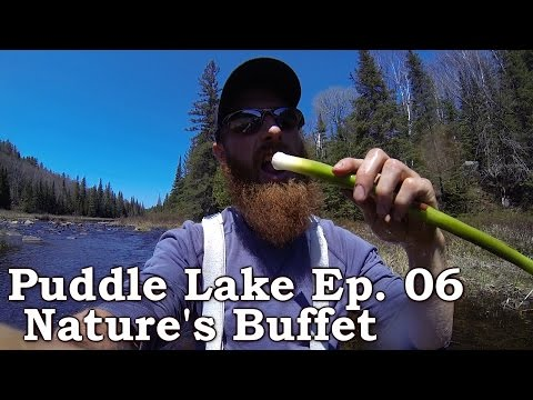 """""""Puddle Lake"""" Expedition (part 6 of 9): Nature's Buffet, Freshwater Clams, Fish & Cattails++"""