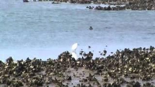 Playa del Regatón -Laredo-