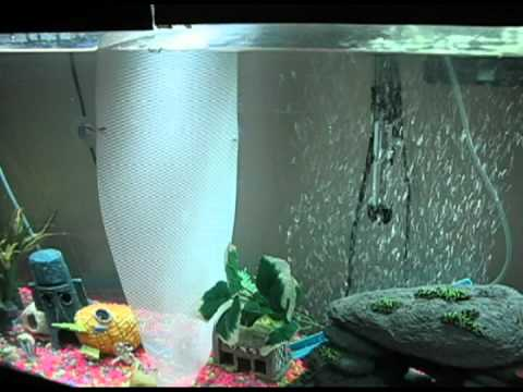 baby fish tank separator