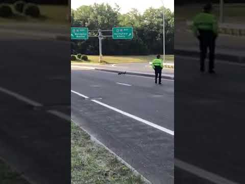 State Police trooper helps duck family cross Mass Pike Ludlow interchange