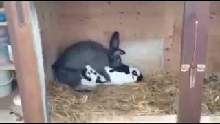 Erken boşalma sorunu olan tavşanın sex hayatı