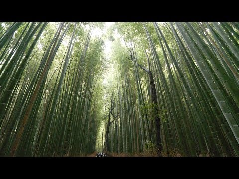 【4K】Walking in Arashiyama, Kyoto - Kameyama park and bamboo groove