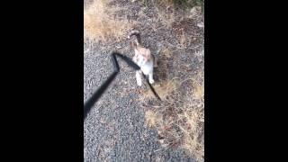 Cute cat plays with a walking cane