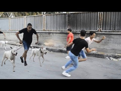 DOGO ARGENTINO TARGETS UP WITH PEOPLE