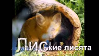 видео про шубы.avi(, 2012-03-26T13:26:26.000Z)