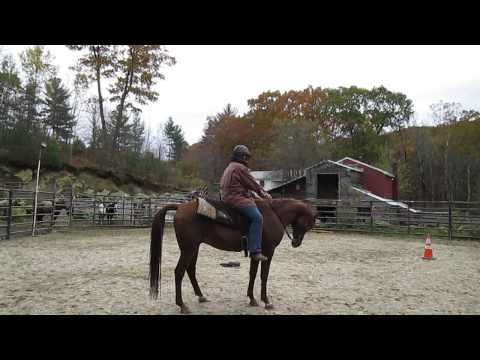Rehabilitaing Arab rescue in Dr. Cook's bitless bridle (Farhand)