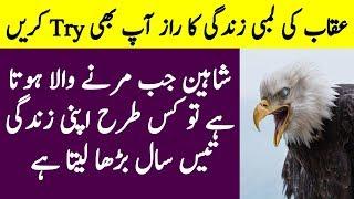 The Secret Behind Eagle