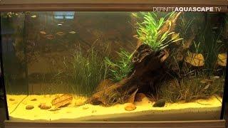 Biotope Aquarium Design Contest 2015 - the 2nd place, Oceania