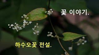 꽃 이야기  하수오꽃 전설  청남 권영한의 이야기