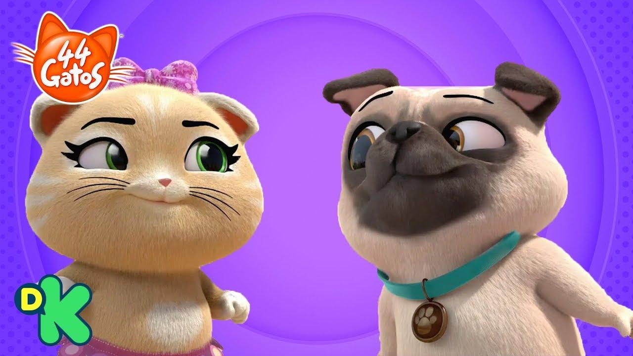 Canta La Canción Perro Y Gato 44 Gatos Discovery Kids