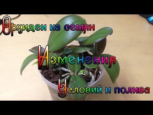 Орхидеи из семян изменения условий и полива