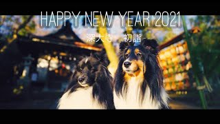 [Sheltie/シェルティ] Happy new year2012/Cinematic Vlog/深大寺 初詣
