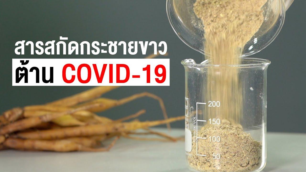 สารสกัดกระชายขาว ต้าน COVID-19 | คลิป MU [Mahidol Channel] - YouTube