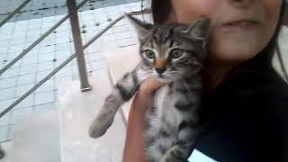 Tatlı mı tatlı kedi Boncuk