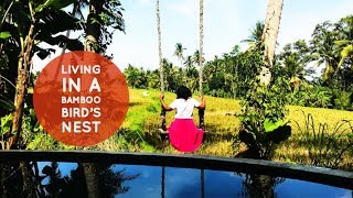 Gambar cover Living in Ubud, Bali | Airbnb Tour | Firefly Eco Lodge | Second Breakfast Unique Stays