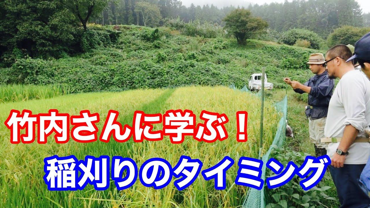 【自然稲作】竹内さんの自然稲作ミニセミナー「稲刈りのタイミング」!