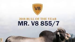 Mr. V8 855/7 - 2018 Bull of the Year Brahman Bull at V8 Ranch