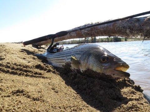 Striped Bass Fishing Miramichi
