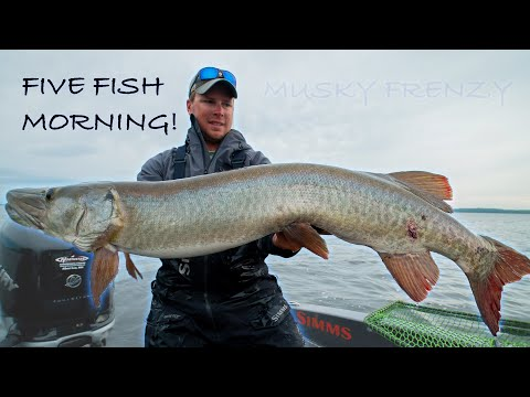 5 FISH MORNING! (Crazy Musky Action) Guiding On LOTW