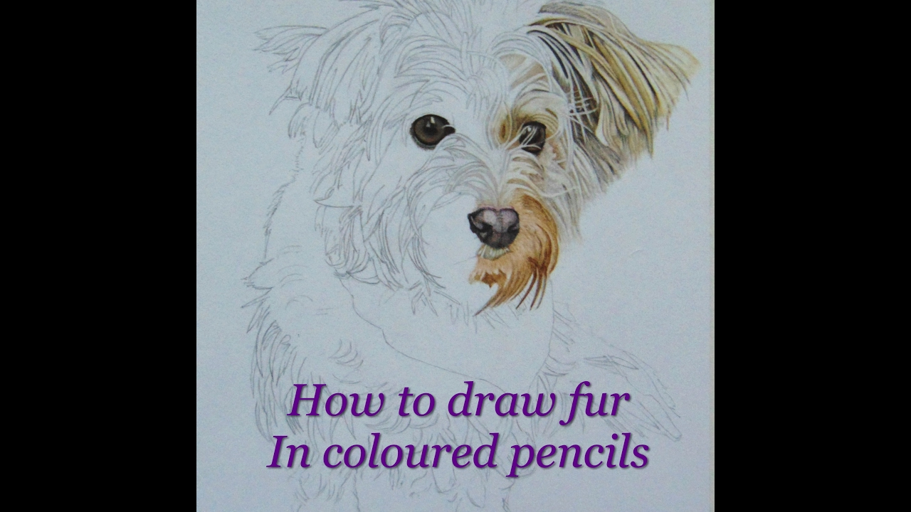 How To Draw Fur In Coloured Pencil