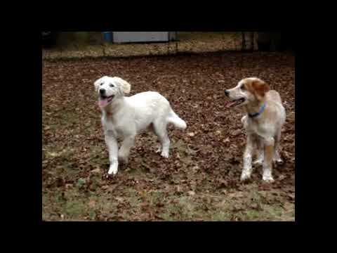 Tucker & Tanner Happy Dog Rescue