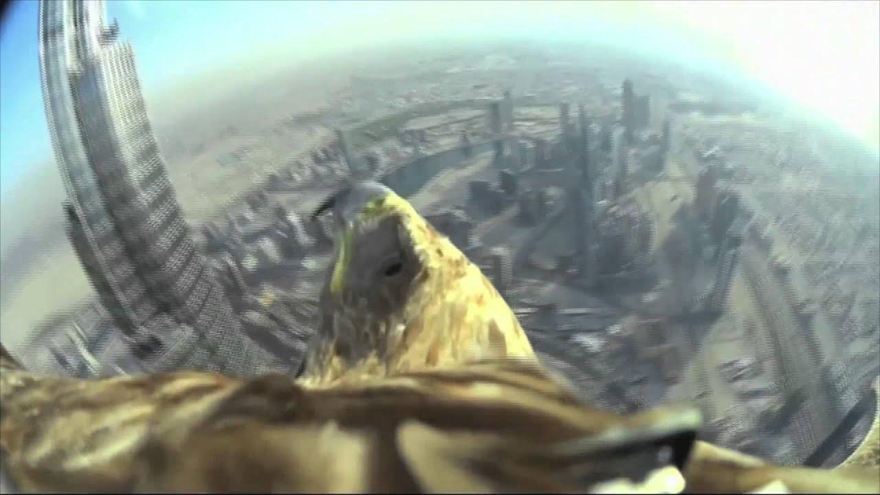 Un aigle quip d 39 une cam ra s 39 lance du plus haut gratte ciel du mon - Gratte ciel le plus haut du monde ...