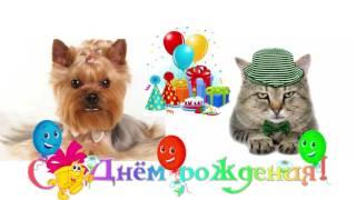 видео открытка с днем рождения оригинальное видео поздравление