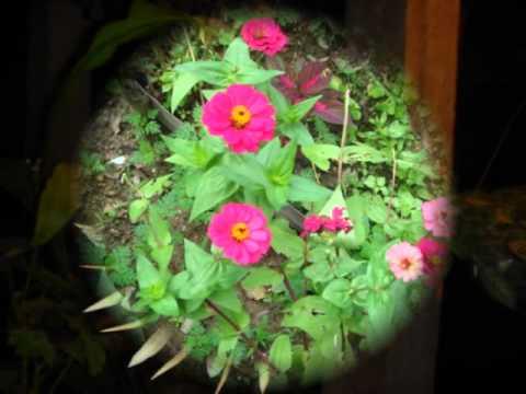 Todo tipo de plantas youtube - Tipos de plantas ...