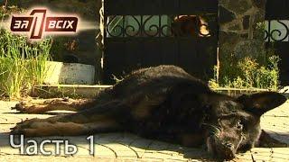 Зачем догхантеры убивают бродячих собак? – Один за всіх. Часть 1 из 4 от 25.09.16