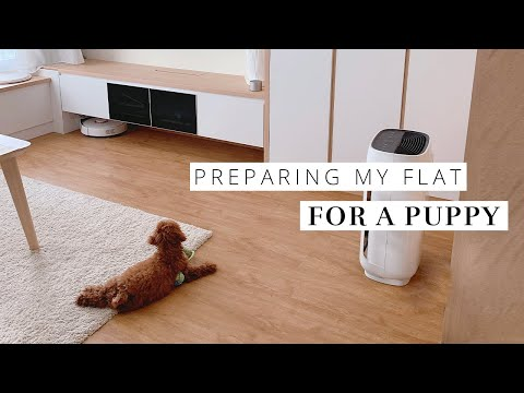 Preparing My Apartment for A Puppy