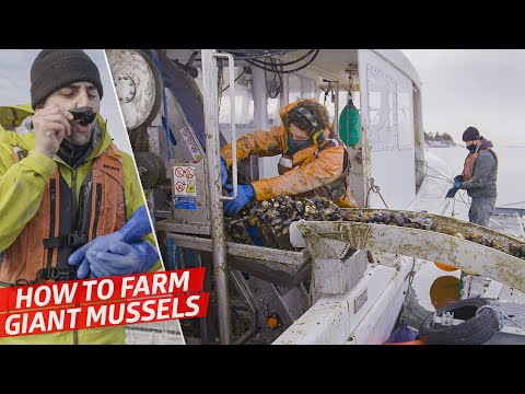 How a High-Tech Mussel Farm Produces 7,000 Pounds of Gigantic Mussels per Day — Dan Does