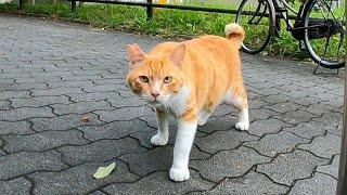 公園の入口で横になる野良猫を撫でるとゴロンゴロン転がってカワイイ