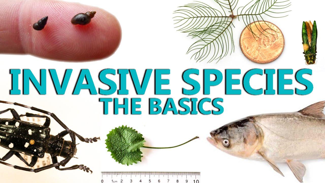Image result for invasive species