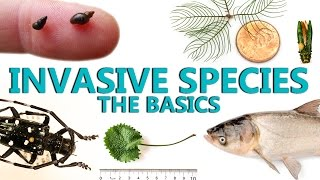 Invasive Species: The Basics