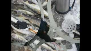Зимняя рыбалка на Белом море Лов Корюшки(Рыбалка на Белом море зимой лов Корюшки Наваги., 2013-02-23T16:55:40.000Z)