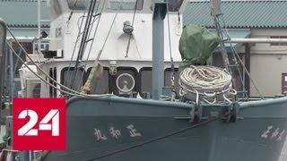 Япония возобновляет охоту на китов - Россия 24