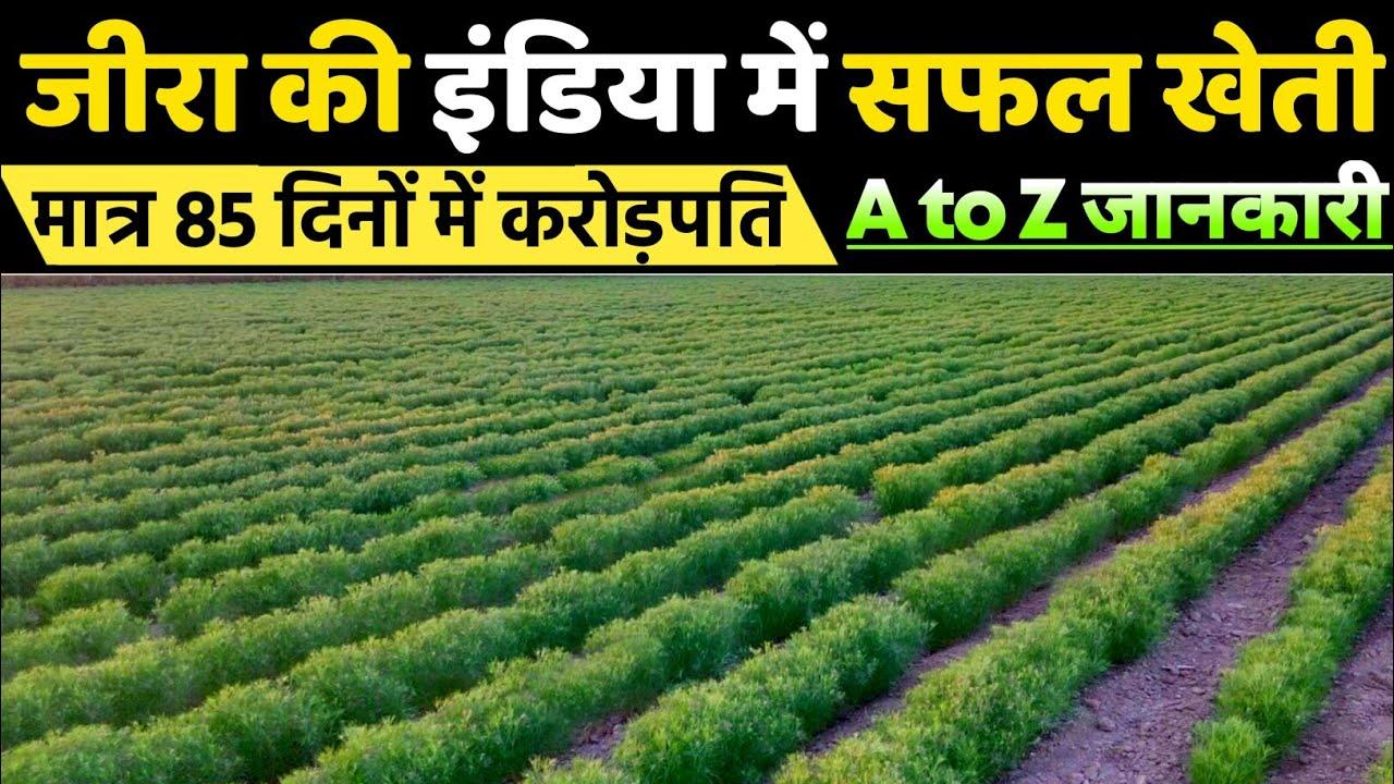 जीरा की सफल खेती | Cumin ki kheti | cumin cultivation | Jira ki kheti kaise Kare | A to Z जानकारी