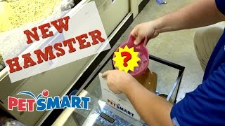GETTING MY NEW HAMSTER AT PETSMART