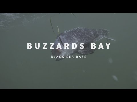 New England Fishing // Buzzards Bay // Episode 108