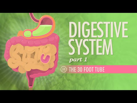 Digestive System, Part 1: Crash Course A&P...