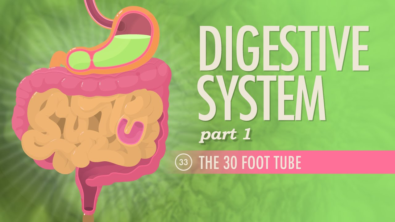 Digestive System Part 1 Crash Course Ap 33 Youtube