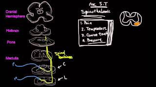The Spinothalamic Tract
