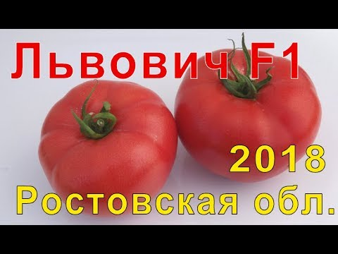 Львович F1 -  с.Бацманово Ростовской области.