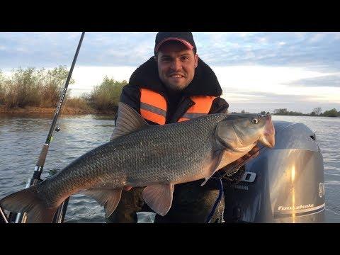 Рыбалка в Астрахани 2019//Вобла, судак, щука, жерех и грибы?? База Протока