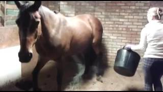 Toilet trained horse