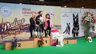 PHALENE - Best Progeny Group. FCI CACIB Dog Show 2017 ♦ ФАЛЕН - Лучший производитель. Выставка собак